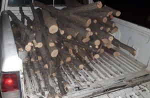 قاچاقچیان چوب جنگلی مامور یگان منابع طبیعی خانمیرزا را زخمی کردند