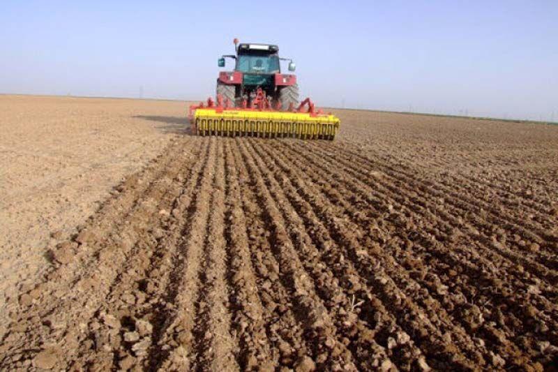 کشت بادام زمینی در ۲.۵ هکتار از اراضی کشاورزی بروجرد انجام شد