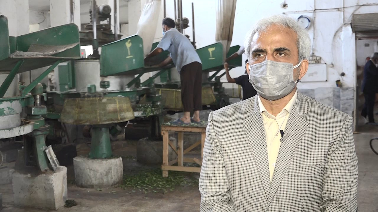 ۳۰ مهر آخرین روز خرید تضمینی برگ سبز چای