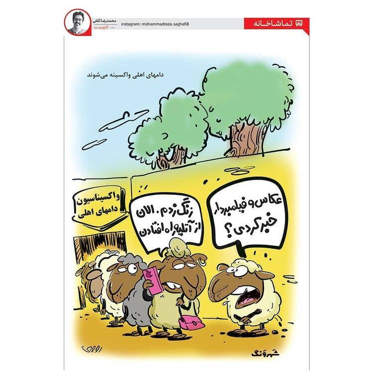 کاریکاتور/ واکسیناسیون گوسفندها هم کلید خورد!