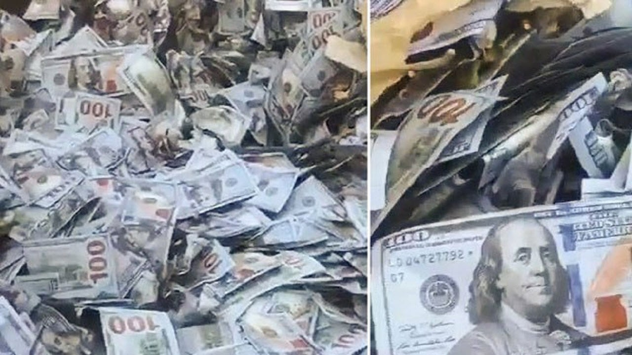شوک رفتگر با دیدن سطل زباله پر از دلار