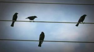 عملیات نجات پرنده از روی سیم برق با پهپاد