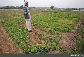 پرداخت غرامت به بیمه شدگان کشاورزی سیستان وبلوچستان