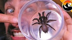 پیداکردن عنکبوت سمی در زیر تختخواب!