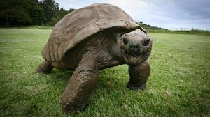 قدرت خارق العاده آرواره لاکپشت
