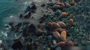 لحظه دردناک و دلخراش سقوط دستهجمعی گرازهای دریایی