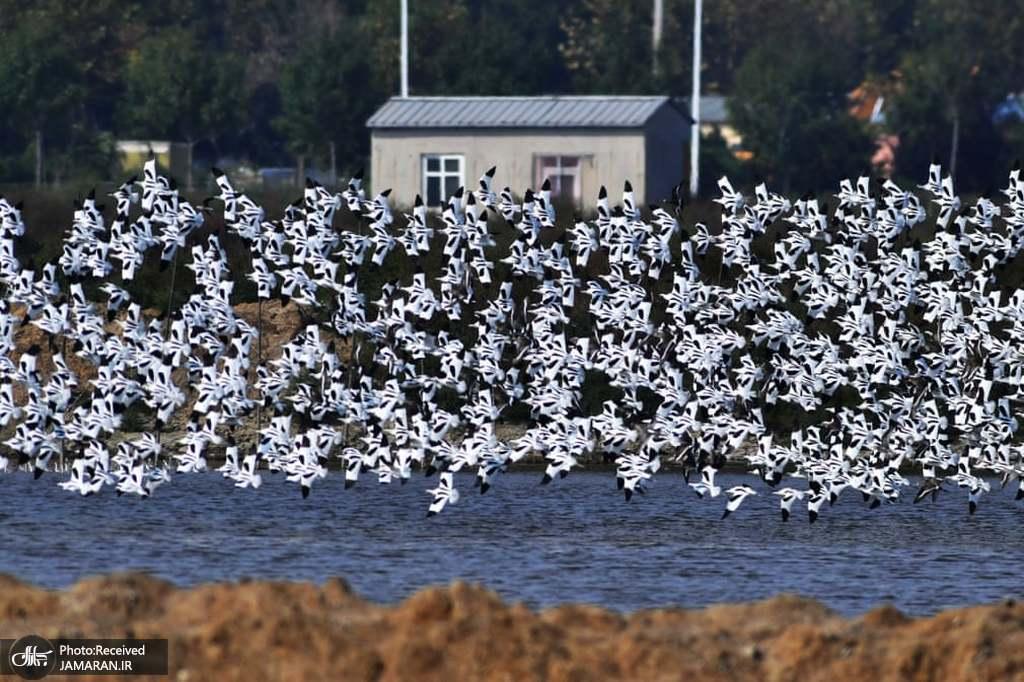 پرواز دیدنی پرندگان در دهکده ماهیگیری نیائوهوی چین