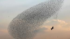 رقص و زمزمه زیبای پرندگان در آسمان
