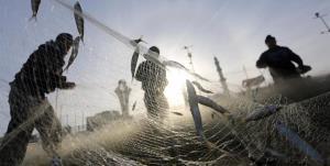 صنعت آبزیپروری ظرفیت پنهان اقتصادی آذربایجانغربی