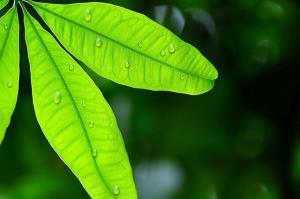 ۳۰ برابر میزان بارندگی در خراسان رضوی تبخیر میشود