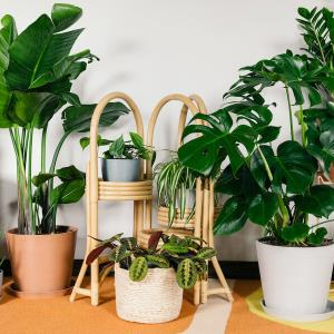 آموزش قلمه زدن و کاشت گیاه در خانه
