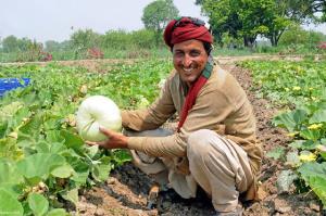 کشاورزی که سکه برداشت میکند!