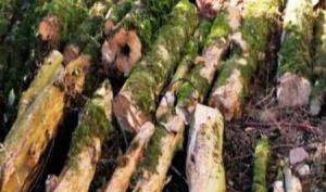 کشف و ضبط ۲۳ تن چوب جنگلی قاچاق در مازندران