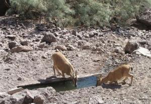 مورد جدیدی از طاعون در حیات وحش چهارمحال و بختیاری مشاهده نشد