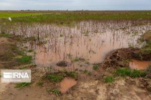 حوادث طبیعی بیش از ۸ هزار میلیارد ریال به خراسان شمالی خسارت زد
