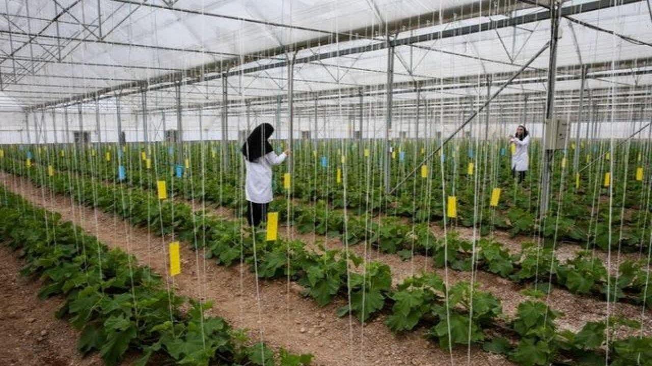 احداث ۱۹.۱ هکتار گلخانه در چهارمحال و بختیاری در دست اجراست