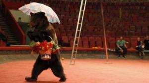 حمله ناگهانی خرس قهوهای به زن باردار در سیرک!