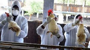هشدار دامپزشکی طرقبه شاندیز نسبت به شیوع آنفلوانزای فوق حاد پرندگان