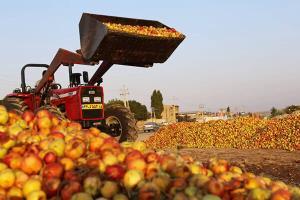 انباشت ۳۰۰ هزار تن سیب در جادههای آذربایجانغربی