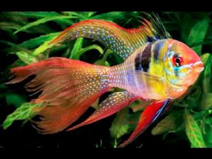 داستانک/ ماهیِ نظر کرده