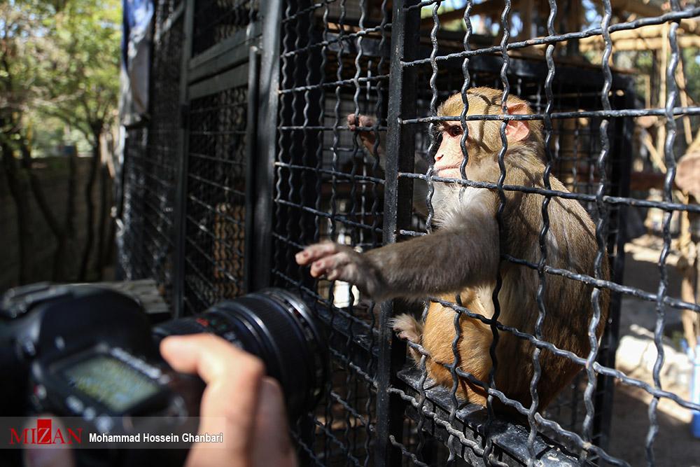 شیطنت میمون در باغ وحش ارم سبز