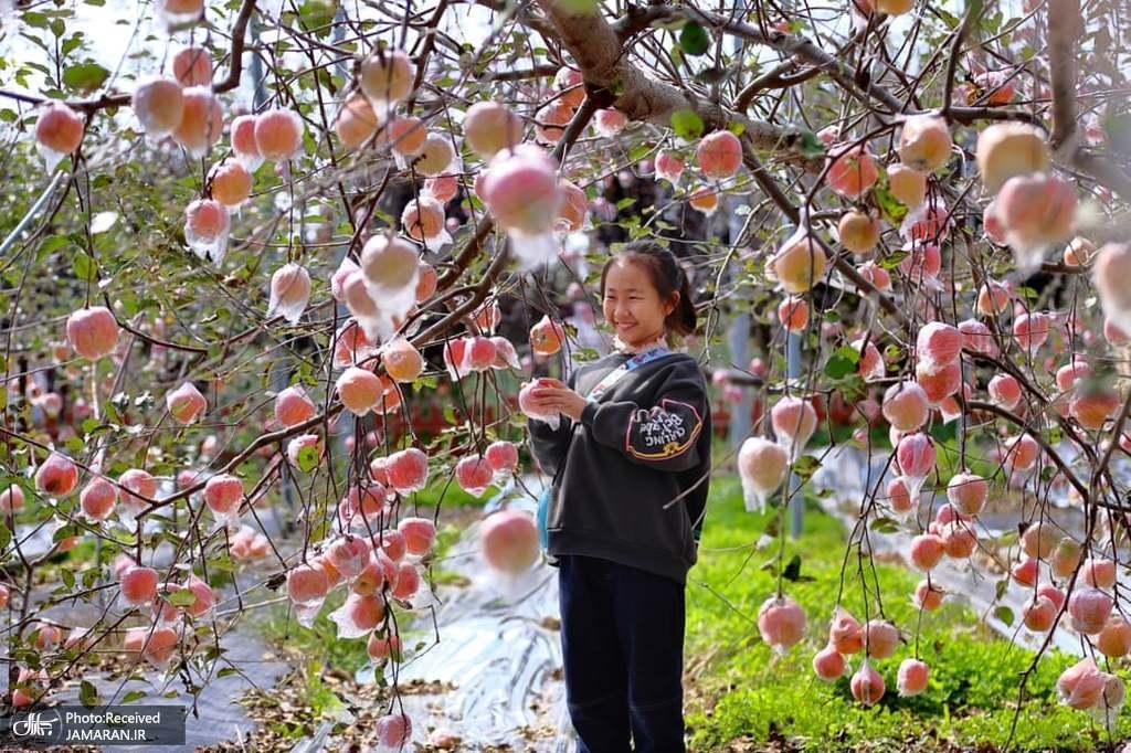 نمایشگاه بین المللی تجارت میوه در چین