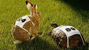 مسابقه جالب خرگوش و لاکپشت در دنیای واقعی