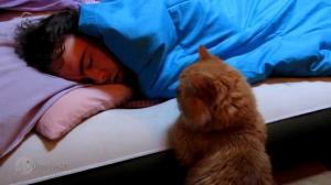 گوناگون/ تعبیر دیدن گربه در خواب