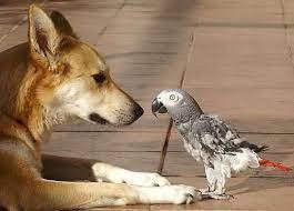 تقلید صدای سگ توسط طوطی!