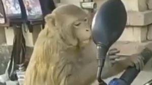 عکس العمل جالب میمون با دیدن عکسش در آینه