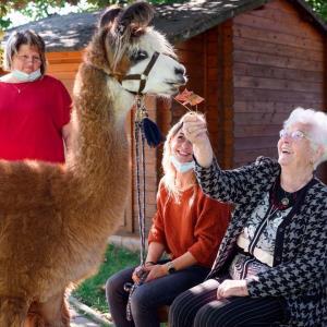 عیادت لاماها از خانه سالمندان در آلمان