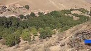 توسعه سطح باغات گردو در شهرستان الیگودرز