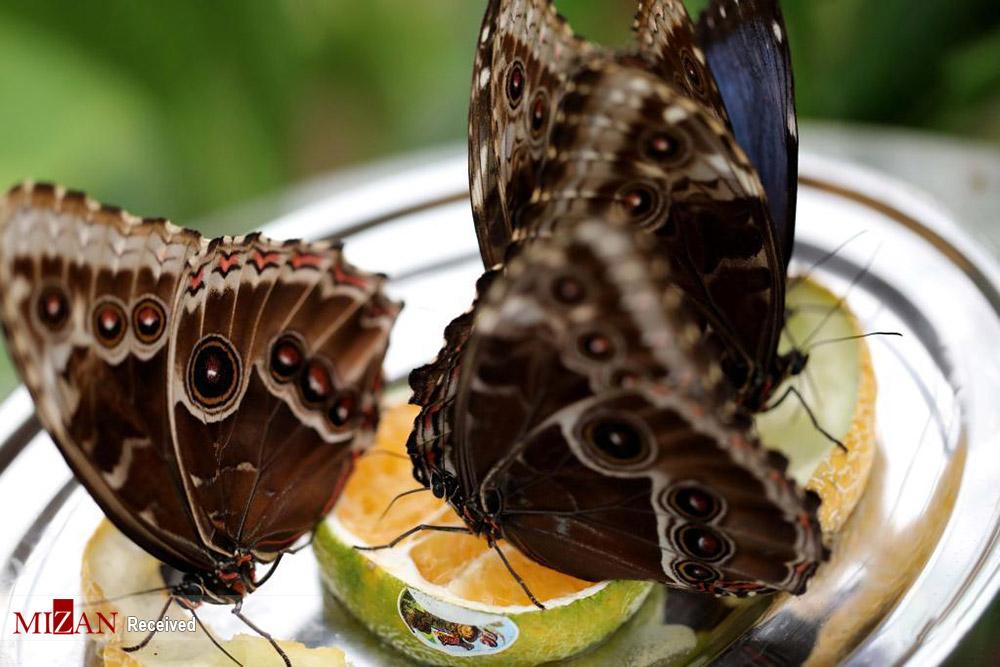 نمایشگاهی پر از پروانه