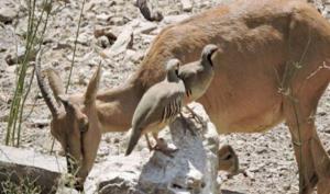 موردی از شیوع بیماری طاعون در حیات وحش استان کرمانشاه مشاهده نشده است