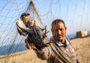 رهاسازی ۲۳ نوع پرنده از دام شکارچیان در تالاب هورالعظیم