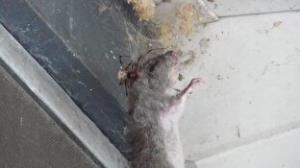 وقتی موش در دام عنکبوت میافتد!