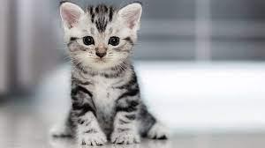 واکنش گربه به نقاشی متحرک!
