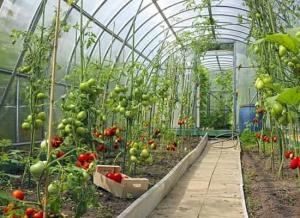 هشدار هواشناسی کشاورزی سطح زرد در یزد