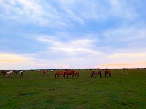 تصاویری دیدنی از اسبهای وحشی در پارک ملی بوجاق