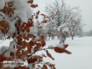هشدار سرمای شدید در استان سمنان؛ کشاورزان گوش به زنگ باشند