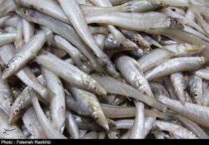 سرانه مصرف ماهی در اصفهان کاهشی است
