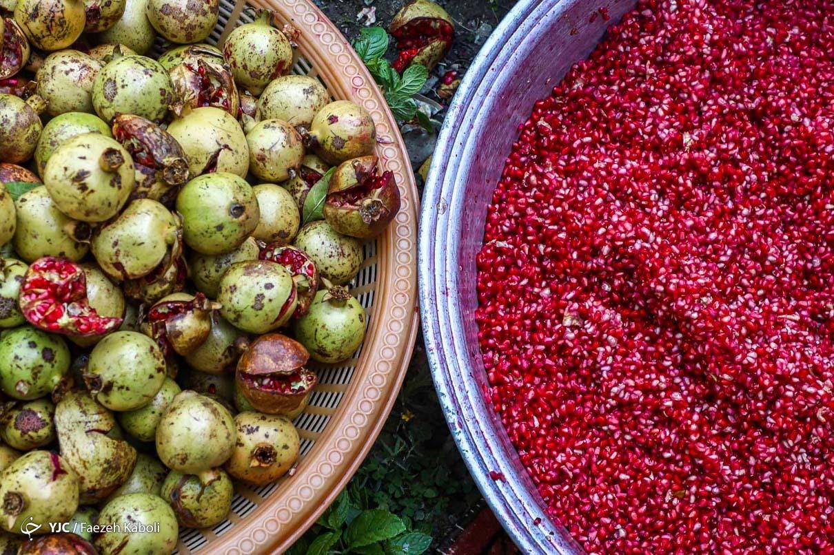 عکس/ آغاز فصل برداشت و پخت رب انار
