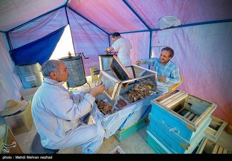 عکس/ برداشت عسل در جم بوشهر