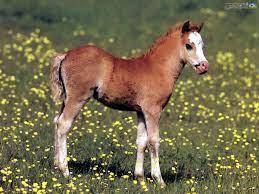 رقص این کره اسب زیبا واقعا دیدنیه