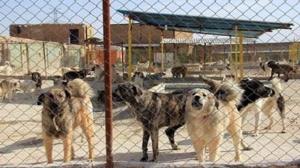 راهاندازی مرکز جمعآوری حیوانات مزاحم در بهشت سکینه