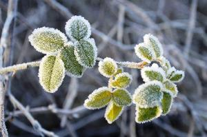 دمای هوا در برخی نقاط همدان به زیر صفر رسید