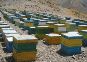 اقلیم طبیعی لامرد مهیای زنبورداری