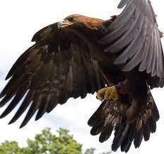 شکار فوق العاده سفره ماهی توسط عقاب!