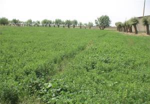 صدور مجوز کشت پاییزه در زمینهای کشاورزی دشتآزادگان