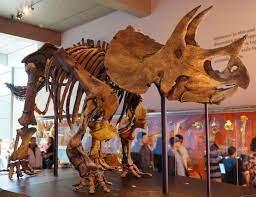 4گوشه دنیا/ فروش اسکلت بزرگترین دایناسور به مبلغ ۷ میلیون یورو